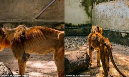 Kaduna zoo bars journalists from entering facility after photos of starving lion and other animals went viral