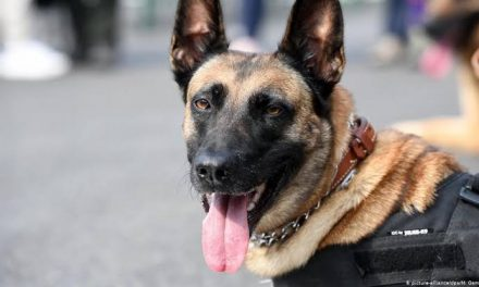 FG approves N658 million for the procurement of sniffer dogs for Lagos and Abuja Airports